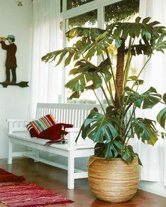 Las plantas de interior más resistentes