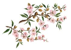 Painted illustration of almond blossom for chocolate bars.
