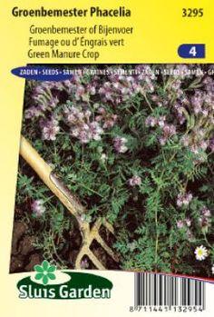 Groenbemester Phacelia - Phacelia en kattengras - Producten - Sluis Garden