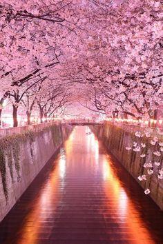 Wonderful Pink Cherry Blossom Wallpaper iPhone - Best iPhone Wallpaper