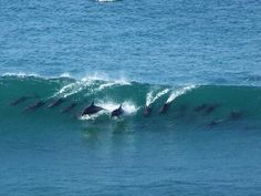 Surfing Dolphins Photo by Leona Fuller. National Geographic Your Shot.