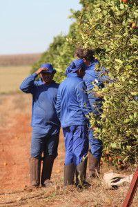 Die Abgründe der Orangenindustrie