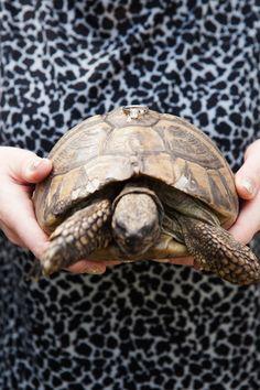 www.taylorwolfphoto.com #tortoise #wedding #rings