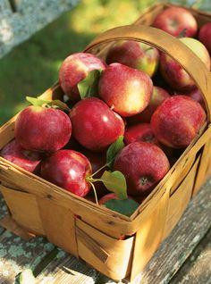 Gelée de pommes Recettes | Ricardo