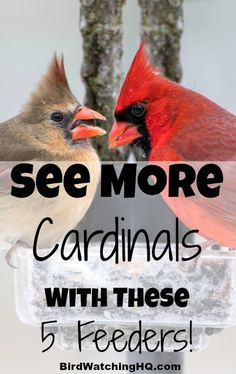 These bird feeders are great for attracting the most popular bird in North America... the Northern Cardinal! You will also learn other tips and strategies to make sure these gorgeous birds visit your backyard all year long, including the food that cardinals are attracted to the most.