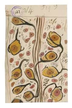 Beautiful Brain: The Stunning Drawings of Neuroscience Founding Father Santiago Ramón y Cajal – Brain Pickings