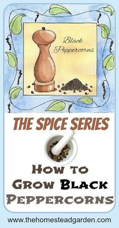 Did you know that you can grow Black Peppercorns in your home? Learn how to grow this beautiful vine in your home, no matter where you live.