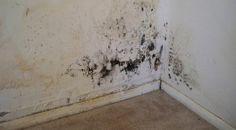 Tedd ezt a sarokba, többé nem jön elő a penész! Interior Walls, Interior And Exterior, Drywall Installation, Get Rid Of Mold, Paint Brands, Painting Services, Exterior Paint, Diy And Crafts, Home Improvement