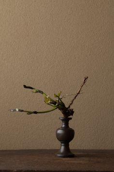 2012年5月11日(金)   葛の産声を聞くようです。   花=葛(クズ)   器=古銅亜字形華瓶(鎌倉時代)