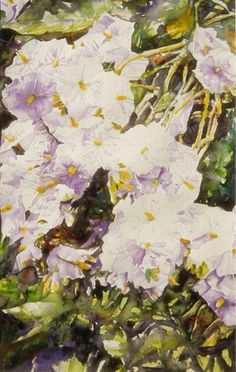 "not so wild  plant hanging / growing down over a stone wall   - bermuda 7   30"" x 16""  micheal zarowsky / watercolour on arches paper /"