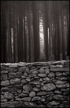 Stone Wall and Pines Fear Of The Dark, Brick And Stone, Black And White Photography, Beautiful, Simple, Wall, Painting, Inspiration, Black White