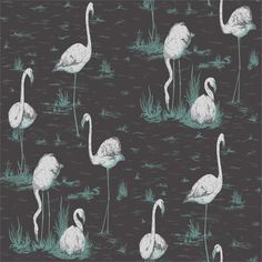 95/8048 | Cole and Son Wallpaper | Flamingos | Wallcovering