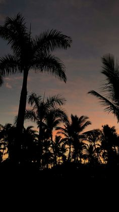 20 Best Backyard Palm Trees - Ideas For Decorating Around Your Home Beach Sunset Wallpaper, Palm Wallpaper, Phone Screen Wallpaper, Summer Wallpaper, Pastel Wallpaper, Cute Wallpaper Backgrounds, Nature Wallpaper, Cute Wallpapers, Aesthetic Backgrounds