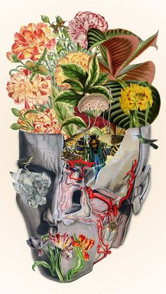 Delicate Collages Inspired by Anatomy and Botany