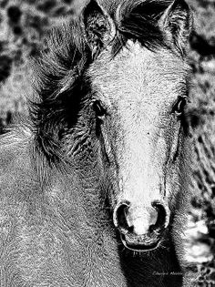 Red Willow (Taos ) pony in Ilford FP4+ medium format fine grain with a green filter. ---- Taos New Mexico