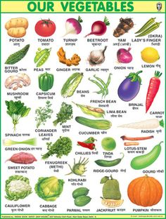 One of the oldest educational publishers of children books, maps, atlases and pictorial charts. Vegetable Chart, Vegetable Shop, Learn To Write Cursive, Name Of Vegetables, New Seven Wonders, Learning Cursive, English Words, English Grammar, Teaching English