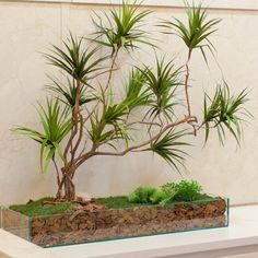 Montada com troncos tratados e folhas feitas artesanalmente, a dracena preservada pode ser montada em vasos como árvores ou como arranjos de mesa, bem como jardineiras e divisórias verdes. Deixa o ambiente moderno e sofisticado. Próprio para decorar ambie
