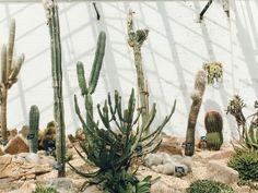 Dyffryn Gardens : Greenhouses - Cardiff, South Wales