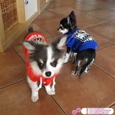 Sweatshirt für Hunde ohne Kapuze in Orange #Hunde #Chihuahua - Sweatshirt für Hunde in Orange, 100% Baumwolle, ohne Kapuze und mit einem Druck auf der Rückseite; In 5 Größen für kleine und mittelgroße Hunde