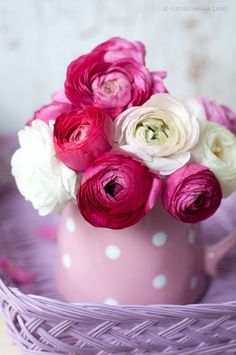 Ranunculus - if only they came back every year in my garden - so beautiful