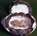 Objects Found In Rocks objects found in...