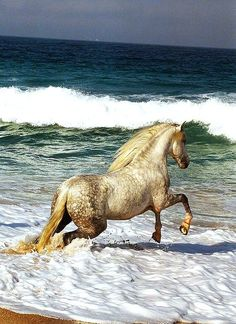 Appaloosa- there are times when I just want to do this... it's a freedom one feels with the sand and water under your feet.