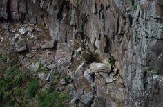 """Vautour Itxusi - Nous sommes partis balader """"A la recherche des premiers vautours"""" avec Hegalaldiamais le temps ne s'y prêtait pas vraiment et il a fallut ce presser un peu pour arriver jusqu'au point de vue, passer un peu de temps sur place et repartir sous une pluie de grêle. Blog Voyage, Point, Mount Rushmore, Mountains, Nature, Travel, Basque Country, Rain, Beginning Sounds"""