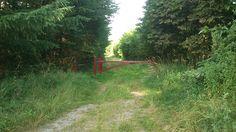 Uma entrada para a Floresta Verdadeira. De Sintrupvej na região do sudeste, perto de Skjoldhøjkilen, em Aarhus, região central da Dinamarca. As primeiras árvores foram plantadas em 1994 em uma área que anteriormente tinha sido caracterizada por campos abertos. Através de aquisições, e da  Agência Dinamarquesa da Natureza e Floresta, o plano para Floresta Verdadeira deve ser de 650 hectares, nesta região.   Fotografia: RhinoMind.