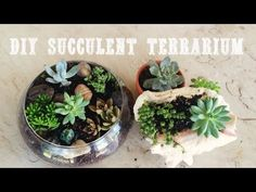 DIY Terrarium with Succulents - YouTube