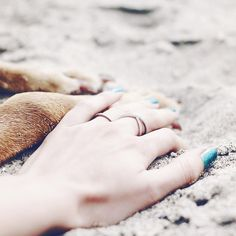 Sandy paws make us happy <3 Lina (@lbtoma) • Instagram photos and videos