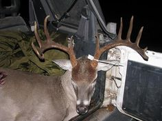 """BIG Buck killed on our Ranch  11 point with 20"""" inside spread"""