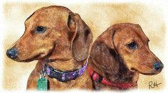 Dachshund Clube - Richard Health