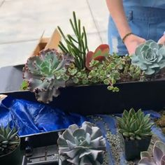 succulents indoor For how-tos, tips and tricks, and inspiration on all things succulents. check out our website for some helpful articles to encourage you to be the best succulent gardener! Succulent Landscaping, Succulent Gardening, Container Gardening, Garden Plants, Indoor Plants, Succulent Care, Indoor Succulent Garden, Succulent Pots, Container Plants