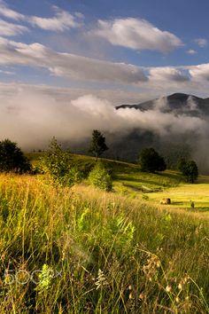 Mountain valley in summer morning. Ukraine