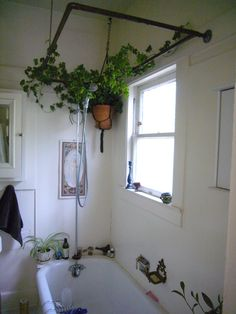 By Heather Rhoades Putting plants in your bathroom is not only possible, but is also an excellent way to dress up your bathroom. Bathrooms are oftentimes the perfect environment for tropical houseplants. Their typically low light and high humidity are ideal for many houseplants. Let's look at plants for your bathroom, even plants for bathroom…