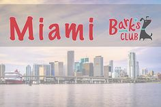 Miami dog boarding, sitting and dog hotel. A full-service dog hotel and boarding service provider in Miami. Best Hotels In Miami, Seattle Skyline, New York Skyline, Can Dogs Eat Tomatoes, Dog Boarding Near Me, Dog Hotel, South Beach Miami, Dog Daycare