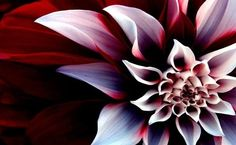 Beautiful Dahlia used as inspiration for table with stain art {Reality Daydream}