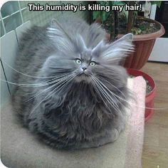 Wow.............................Nylon carpets and long haired cats should never mix........lol ;-)xx