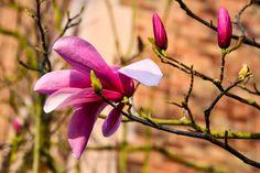 Mit dem Frühjahr beginnt die arbeitsintensivste Zeit im Garten. Um einen nachhaltig gepflegten Garten zu erhalten, gibt Ihnen Pflanzlan hier einen Überblick über die wichtigsten Arbeiten im Frühjahr. #Pflanzplan #Gartengestaltung #Terrassengestaltung #Garten #Terrasse #Gartentipps #Terrassentipps #Frühlingstipps #Frühjahrstipps  #Frühlingspflege #Frühjahrspflege #Frühling #Frühjar #Rasenpflege #Rasenmähen #Vertikutieren #Düngen #Dünger #Rasenschnitt #Rosenschnitt #Strauchschnitt Plants, Backyard Patio, Plant, Planets
