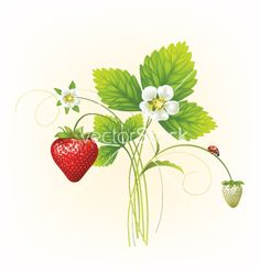 strawberries graphics - Google Search