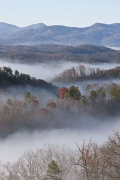 Pristine fog in the Great Smoky Mountains.
