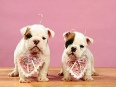 61 Best Valentines Day Pet Edition Images Cute Baby Dogs Cute