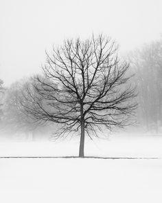 Black and White Tree Prints - Tree Art Print - Winter Trees - Black and White Landscape Photography - Winter Photography - Tree of Life Art by jennifersquires on Etsy https://www.etsy.com/listing/36862847/black-and-white-tree-prints-tree-art