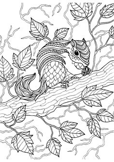 Squirrel adult colouring page : Colouring In Sheets - Art & Craft | Art Supplies I eckersleys