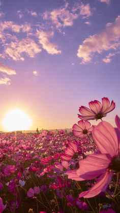 Pedro Morais has just created an awesome short video with original sound is part of Cosmos flowers - Wallpaper Nature Flowers, Beautiful Flowers Wallpapers, Flower Phone Wallpaper, Beautiful Nature Wallpaper, Pretty Wallpapers, Flowers Nature, Beautiful Landscapes, Mobile Wallpaper, Iphone Wallpapers