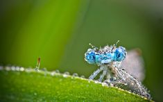 MACRO  wallpaper  | Published 22.09.2012 at 2880 × 1800 in insect macro ...