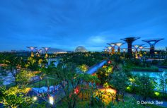 Mövenpick Hotels & Resorts Newsletter May 2013: Gardens by the Bay, Singapore, Copyright Derrick See.