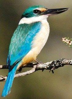 Kingfisher via Bird's Eye View at www.Facebook.com/aBirdsEyeViewForYou Pretty Birds, Beautiful Birds, Bee Eater, Bird Wings, Kinds Of Birds, Bird Illustration, Birds Eye View, Colorful Birds, Kingfisher