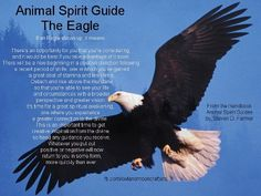 """Animal Spirit Guide: The Eagle - """"In Nat. Am. Cultures the Eagle is Sacred as a Spiritual Messenger one that delivers peace, fertility, honor, freedom, strength, illumination, courage & the ability to rise above all.  Bald Eagle Spirit Medicine is to teach spirit to see the HIGHEST TRUTH... In journey work, Bald Eagle may escort you to distant realms... Expert at Soul Retrieval."""