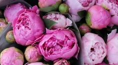 Peonies, simple and elegant; and they smell wonderful! Learn more about them at http://autumnroseflowershoppe.tumblr.com/